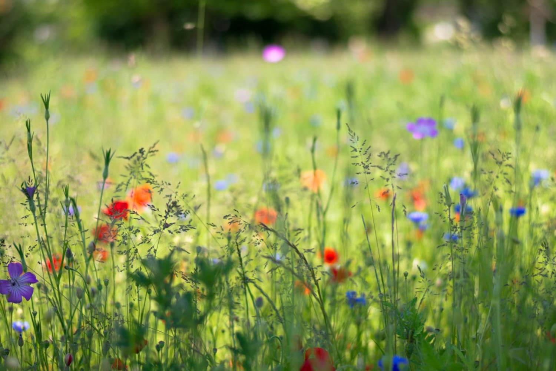 Fleur blog